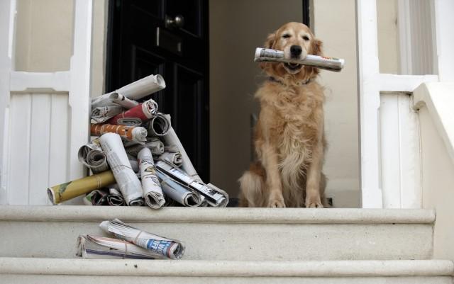 cane giornali